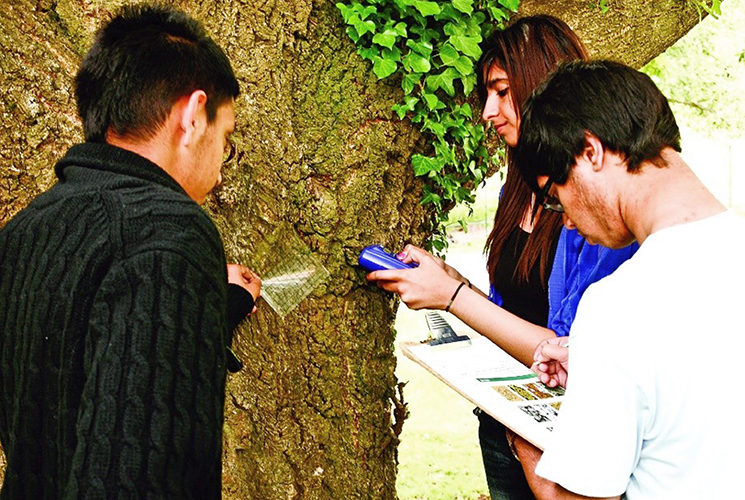 Three students studying a tree trunk
