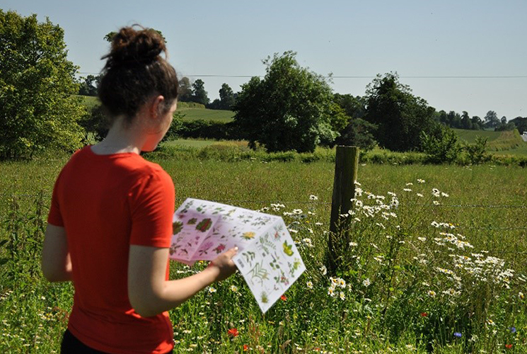 Person studying flowers in a feild using a printed guide